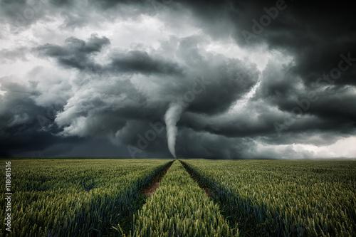Fotografie, Obraz  Tornado wütet über eine Landschaft - Unwetter über Getreidefeld