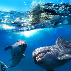 Fototapetatwo dolphins underwater and breaking splashing wave above them