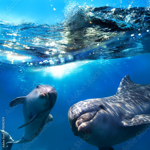 Ingelijste posters Dolfijn two dolphins underwater and breaking splashing wave above them