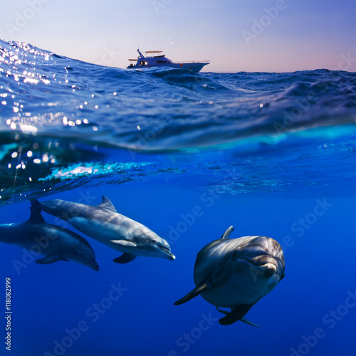 submerged image splitted by waterline three doplhins swimmimng underwater under dive boat