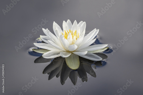 Deurstickers Waterlelies White Water Lily and Reflection