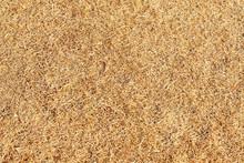 Texture Of Grass Dead