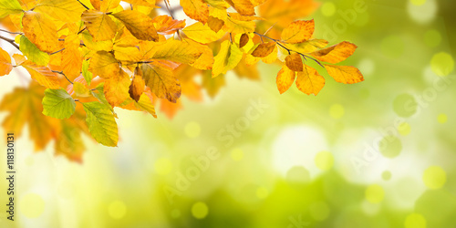 Obraz Nature autumn background - fototapety do salonu