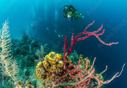 Belize Scuba Diving