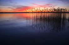 Sunset On A Lake With Reeds