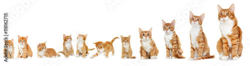 Canvas-taulu Kitten looking on white background