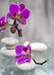 Spa still life with pink flowers and white zen stone