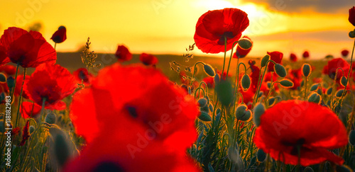 Photo sur Toile Rouge Poppies