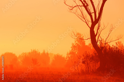 Foto op Aluminium Rood Dry tree and shrubs in mist at dawn