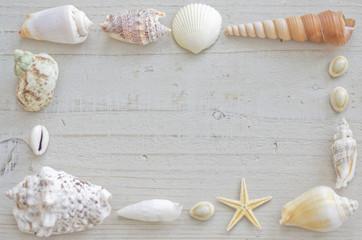 白い貝殻のフレーム