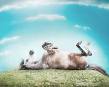 Horse Lying On His Back , Feet...