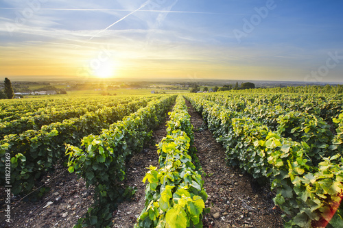 Cadres-photo bureau Vignoble Sun is rising over vineyards of Beaujolais, France