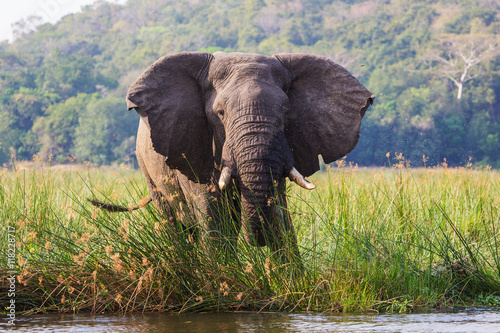 einzelne bedruckte Lamellen - African elephants in the middle of the savannah  (von SB)