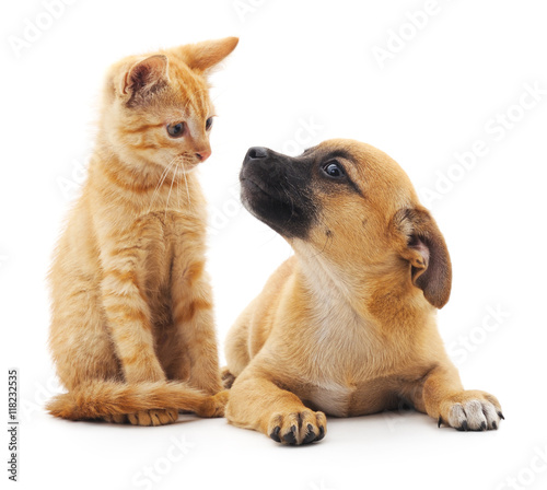 Foto op Plexiglas Kat Red cat and puppy.