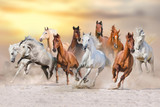 Fototapeta Konie - Horse herd run fast in desert dust against dramatic sunset sky