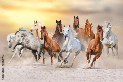 Horse herd run fast in desert dust against dramatic sunset sky Canvas Print