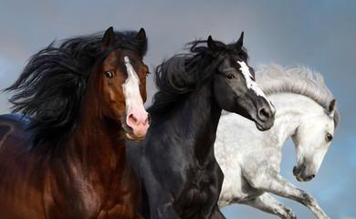 Obraz na Szkle Koń Portrait of three beautiful horses in motion against blue sky