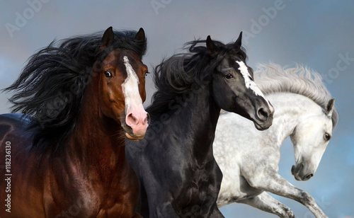Portrait of three beautiful horses in motion against blue sky Canvas Print