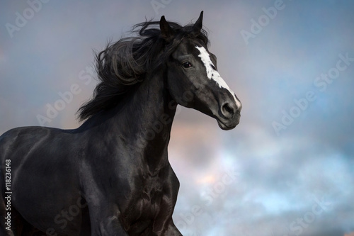 Papel de parede  Black horse portrait in motion