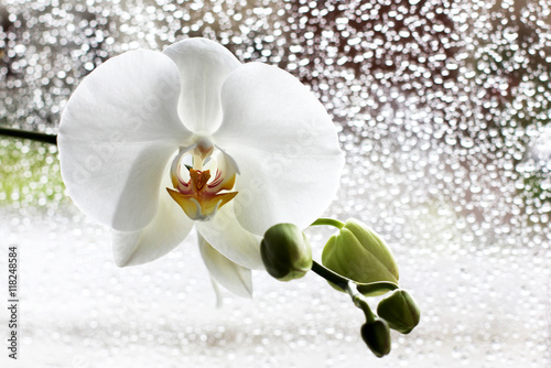 Stickers pour porte Orchidée orchidée blanche derrière vitre après la pluie