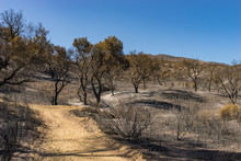 Wildfire Burned Forest
