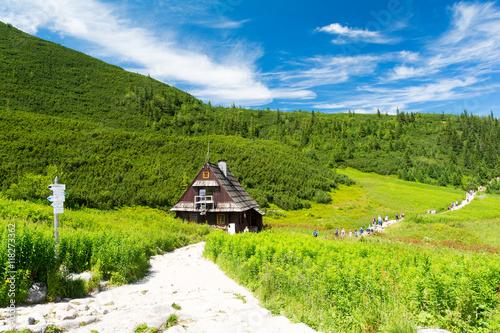 green valley in polish tatra / tatry mountains, Poland