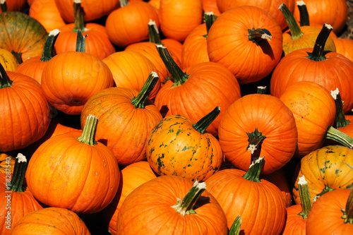 Fotografie, Obraz  pumpkin background
