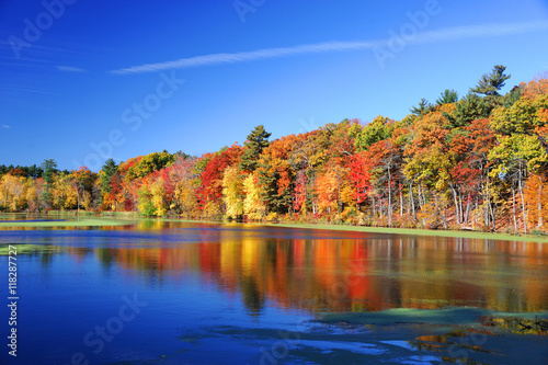 Foto op Aluminium Herfst autumn colorful trees under morning sunlight reflecting in tranquil river