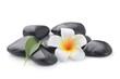 zen basalt stones and Frangipani