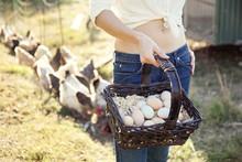 Caucasian Farmer Gathering Chicken Eggs On Farm