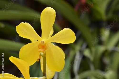 Garden Poster Narcissus Blossom vanda orchid