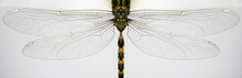 Macro Of Dragonfly Wings And B...