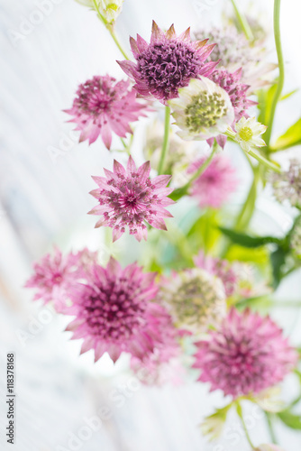 nice flowers Canvas Print