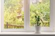 Leinwandbild Motiv crassula flower in pot on windowsill
