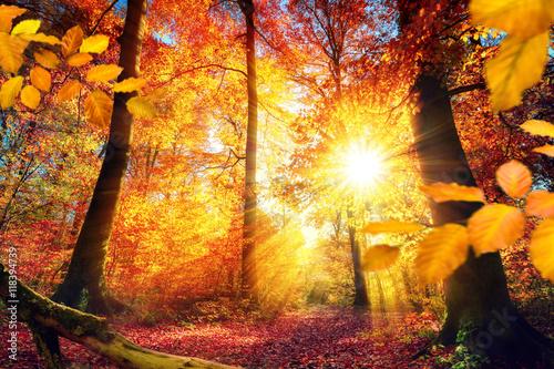 Photo  Malerischer Herbst im Wald mit viel Sonne und lebendigen Farben