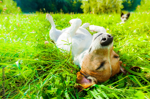 Photo Stands Crazy dog dog siesta at park