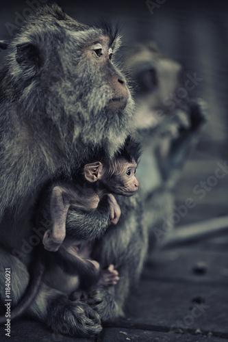 Affe mit Baby. Das Bild wurde im Monkey Forest (Bali/Ubud) aufgenmmen.