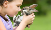 Girl Is Holding A Little Rabbit