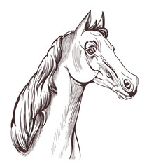 horse head drawing on white. vector