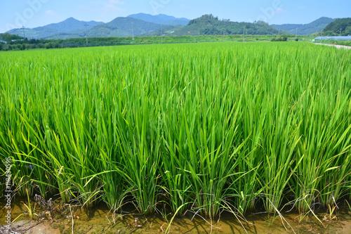 Foto auf Gartenposter Reisfelder Fresh terraced rice field