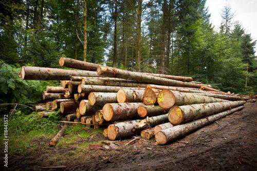 bois tronc coupe débardage bille sapin gestion forestière for