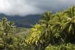 Forest behind Playa Ventanas in Costa Rica