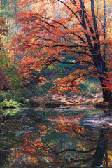 Fototapetaslow autumn river
