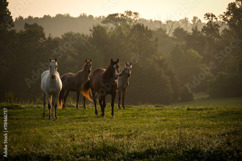 Wild horses in the mountains at sunrise 2