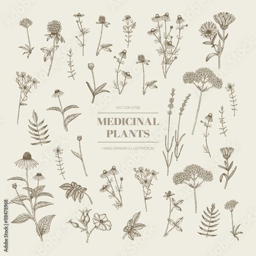 Medicinal herbs. Wall mural