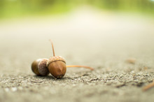 Two Acorns On The Road