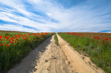 Road In A Green Field With Poppies On A Sunny Day