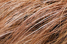 Abstract Long Dry Grass
