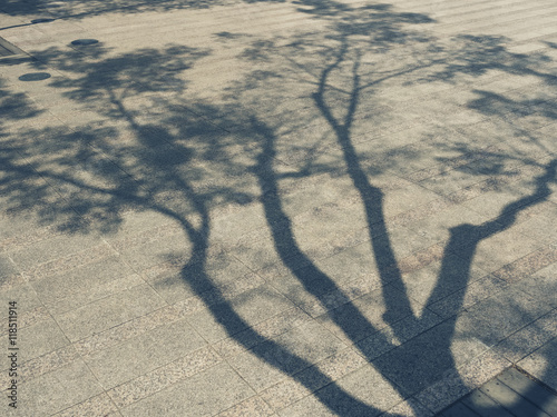 fototapeta na drzwi i meble Tree Branches shadow on cement Nature Abstract background
