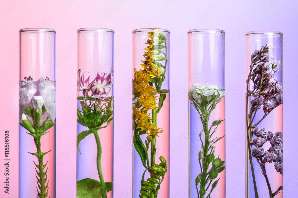 Fototapety, obrazy: Flowers and plants in test tubes on wooden background. The concept of biological research